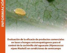 Evaluación de la eficacia de productos comerciales para el control de la cochinilla del aguacate | Agrocabildo