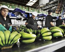 NC cierra con Madrid que el plátano tenga una ayuda anual al transporte de 10 millones, aplicable desde enero de 2017   La Palma Ahora