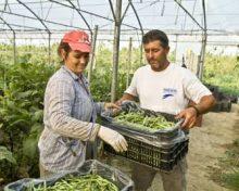 El Gobierno de Canarias convoca los XXVI Premios agrarios, pesqueros y alimentarios, dirigidos a reconocer y visibilizar a la mujer rural