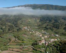 El Cabildo fomenta el cultivo del tagasaste en Garafía dentro del Plan Forrajero de La Palma