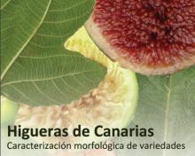 Higueras de Canarias.