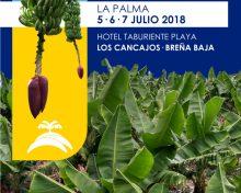 El Cabildo celebrará unas jornadas técnicas dedicadas al cultivo del plátano