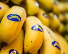 Los productores de plátano alertan sobre el riesgo de las producciones europeas ante el acuerdo comercial de Ecuador con la UE