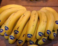 Asprocan explora las opciones para vender plátano en Marruecos