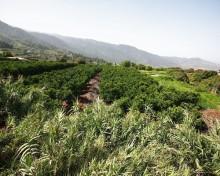 El Gobierno de Canarias concede los 12,6 millones pendientes en subvenciones para las inversiones en explotaciones agrícolas