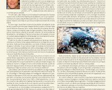El picudo de la platanera: Estrategia de supervivencia. ¿Es posible su control?