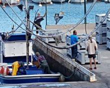 El Gobierno canario abona las ayudas para la producción y comercialización de la pesca tradicional y la acuicultura