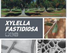 Xylella fastidiosa | Agrocabildo