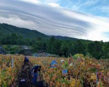 Garafía acogerá el Primer Concurso Regional de Vinos Ecológicos de Canarias | 9 de Junio