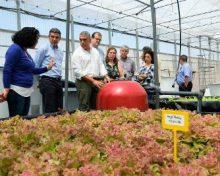 Un sistema de acuaponía, pionero en Canarias, combina el cultivo hidropónico hortícola y la cría de peces de manera sostenible