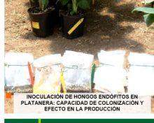 Inoculación de hongos endófitos en platanera: capacidad de colonización y efecto en la producción | AgroCabildo