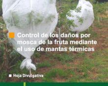 Control de los daños por la mosca de la fruta mediante el uso de mantas térmicas | Agrocabildo