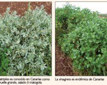 Utilización de forrajes de zonas áridas en la alimentación del ganado caprino y su efecto en la producción de leche y queso