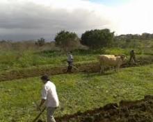 El Gobierno de Canarias reabre el plazo de presentación de solicitudes para acogerse a las subvenciones a inversiones del PDR
