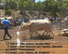 Concurso Insular de Arrastre Isla de La Palma
