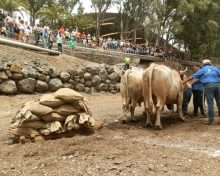 Quinta Prueba del Concurso Insular de Arrastre Isla de La Palma 2017