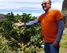 El cultivo del café en La Palma renace fruto de la nostalgia y la pasión – El Apurón