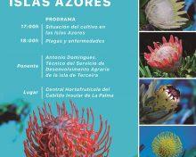 El cultivo de próteas en las Islas Azores