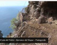 Queso C.R.D.O. Palmero: Costa del Palito | Crónicas del Campo