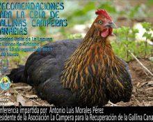 Recomendaciones para la cría de gallinas camperas canarias