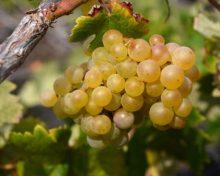 La Escuela de Capacitación Agraria de Los Llanos oferta un nuevo ciclo formativo de viticultura y elaboración de aceite