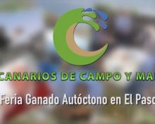 Feria de Ganado Autóctono en El Paso | Canario de Campo y Mar