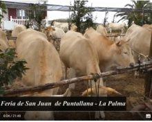 Feria de San Juan de Puntallana | Crónicas del Campo
