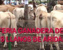 Feria Ganadera de Los Llanos de Aridane 2017   Crónicas del Campo