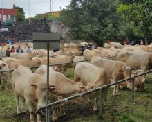 La Feria Ganadera de Breña Alta reunirá a los mejores ejemplares de la Isla