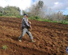 Ayuda a los productores de determinados cultivos forrajeros.