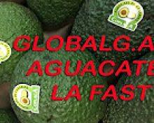 Certificación GlobalGap para Aguacate