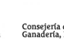 El Gobierno de Canarias y la ULPG realizarán un estudio racial de la abeja negra canaria para recuperar esta raza autóctona
