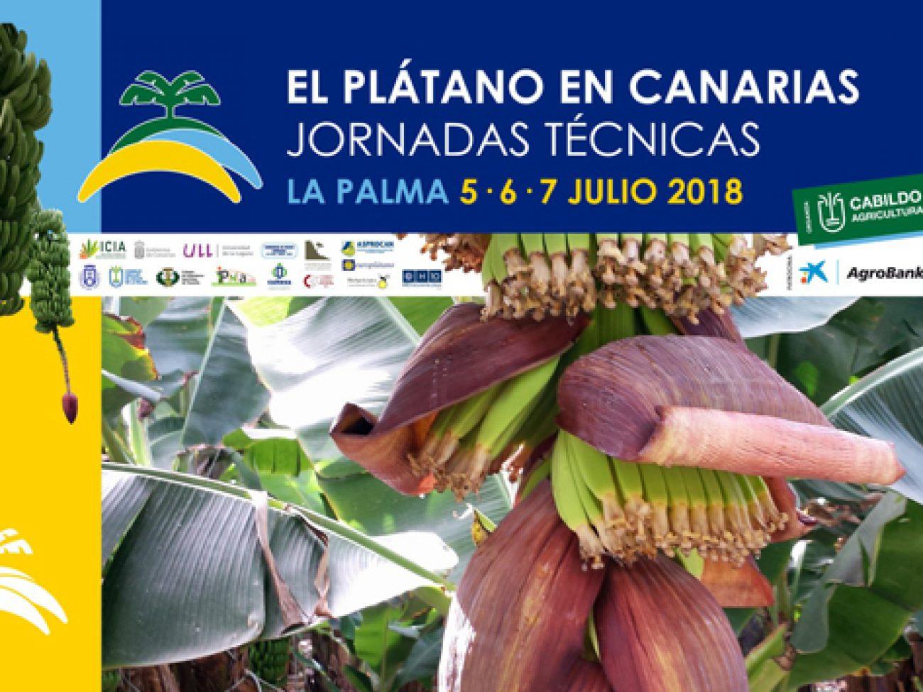 El Plátano en Canarias. Jornadas Técnicas