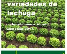 Ensayos de variedades de lechuga. Ciclo primavera-verano. Campaña 2017 | Agrocabildo