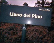 El pino en La Palma: el ángel de Jehová