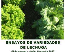 Ensayos de variedades de lechuga. Ciclo verano-otoño. Campaña 2017 | Agrocabildo