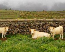 Subvenciones en materia de Agricultura, Ganadería y Pesca del Cabildo de La Palma