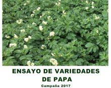 Ensayo de variedades de papa campaña 2017 | Agrocabildo