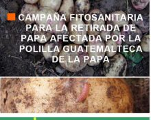 Campaña fitosanitaria para la retirada de papa afectada por la polilla guatemalteca de la papa | AgroCabildo