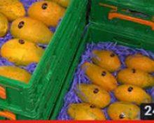 Cultivo de La Papaya | Crónicas del Campo.