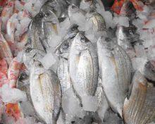 Los operadores de la pesca y la acuicultura de Canarias se acogen a subvenciones por valor de 4,5 millones de euros