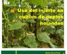Uso del injerto en cultivo de pepino holandés