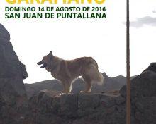 XI Concurso Insular de Perro Pastor Garafiano