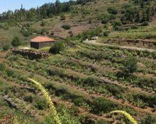 1506 agricultores y ganaderos perciben 4,5 millones de ayudas agroambientales del PDR, gestionadas por el Gobierno de Canarias