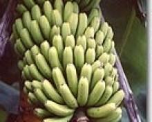 Crea toppings con plátanos de canarias.