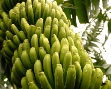 Subvenciones por renovación de compromisos, destinadas al mantenimiento de prácticas y métodos de agricultura ecológica