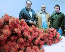 El Cabildo celebra un curso de arte floral con proteas para profesionales del sector