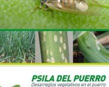 Psila del puerro. Desarreglos vegetativos del puerro | Agrocabildo