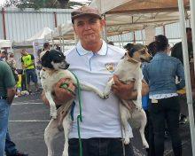 """La recuperación del perro Ratonero Palmero """"va por buen camino"""" y puede ser reconocido como raza autóctona – El Apurón"""