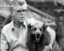 Razas Autóctonas: Vaca palmera, perro pastor garafiano, abeja negra canaria ….